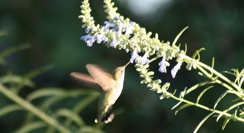 Attract Hummingbirds and Bees With These Beautiful Summer Flowers (15 photos)