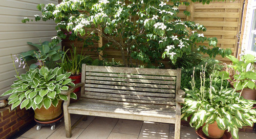 How to Provide Shade in a Small Yard (7 photos)