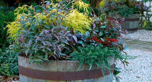 7 Ways to Get Your Container Garden Ready for Winter (9 photos)