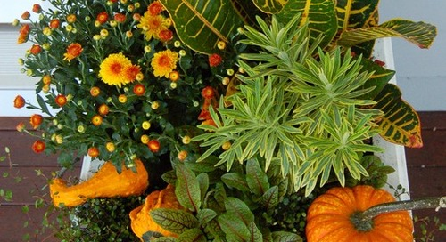 12 Fresh Fall Container Designs for Your Home and Garden (13 photos)