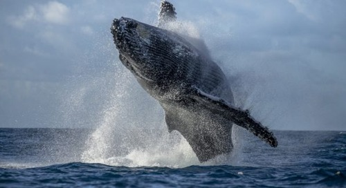 Reducing ship speeds 'a silver bullet' to reduce pollution and save whales