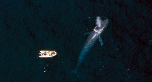 This New AI Technology Could Prevent Ships From Colliding With Whales - Forbes