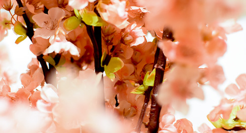 Must-See Spots at the Cherry Blossom Festival