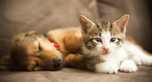 Customer Story: SPCA of Texas