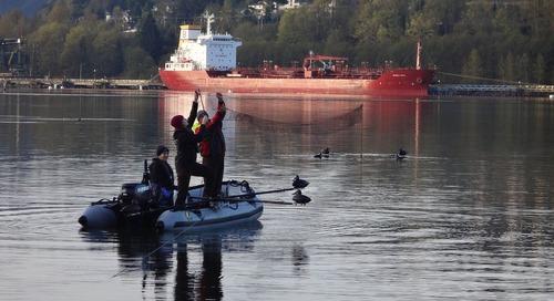 Inside the Barrow's Goldeneye: Exploring effects of oil contamination on marine wildlife