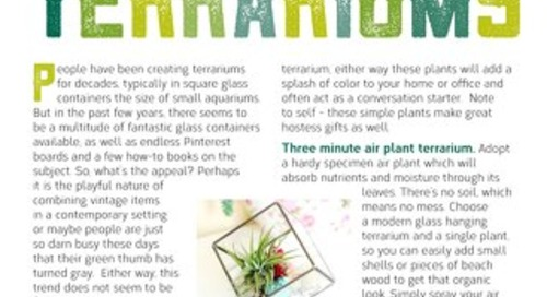 Terrific Terrariums