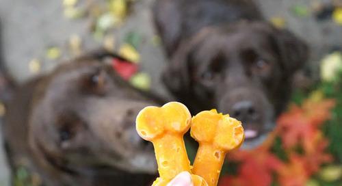 How To Make 3 Pumpkin Dog Treat Recipes
