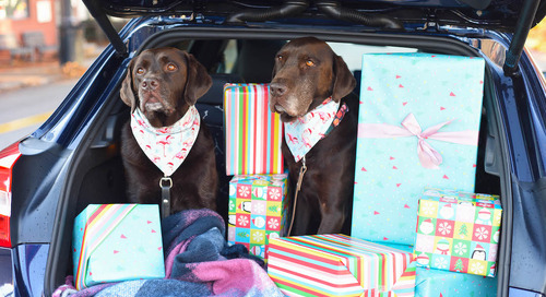 Awesome Dog Gifts That Will Arrive In Time For Christmas