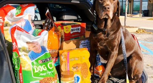 Help Me Support A Local Pet Food Bank During Coronavirus