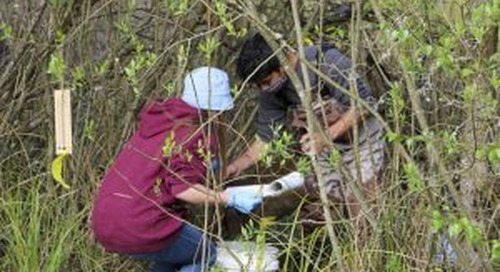 CASEE students track local amphibian population