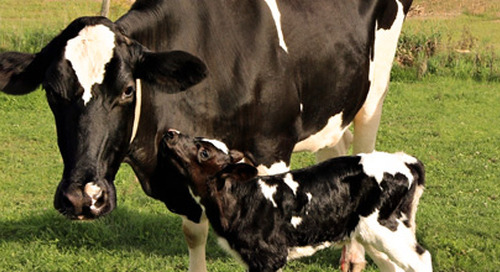 BDO financial benchmarking: FAQs for dairy farmers