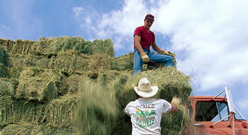 Foreign Help for Local Farms