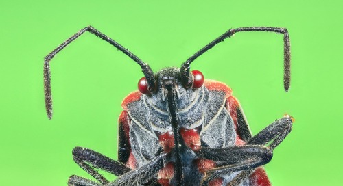 Bug Hunting Stories: Schneider Electric & The Andover Continuum Web.Client