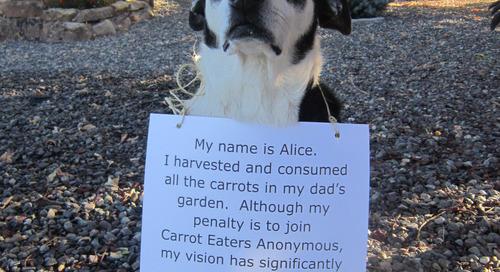 Alice Eats Carrots