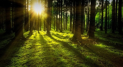 Sustainable Forestry: Can We Get It Right?