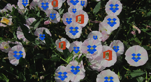 Bindweed: Digging Down to a Root of a Hidden Phishing Network