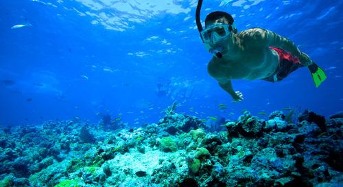 Ini Dia Tata Cara Snorkeling yang Ramah Lingkungan