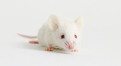 Investigating immunomodulation: Examining GvHD using Humanized NSG™ mice from JAX