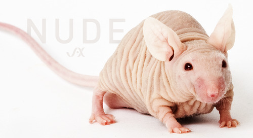Nude Mice - More than What Meets the Naked Eye