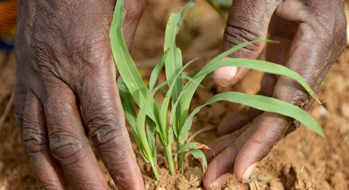Winning in Africa's agricultural market