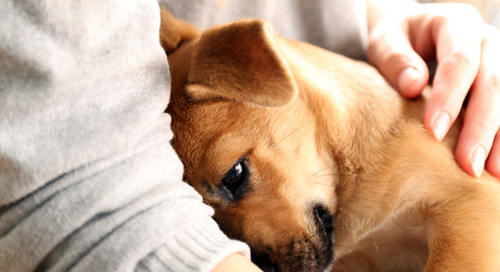 Comment on Why Do Dogs Like to Cuddle? by Alisa