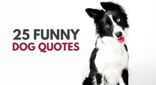 Comment on 30 Cute & Funny Dog Quotes by Opal