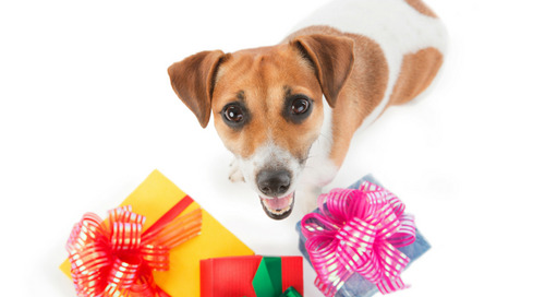 Comment on 20 Fun Christmas Gift Ideas For Your Dog by Justine Fox