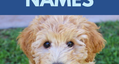 500 Popular Male Dog Names