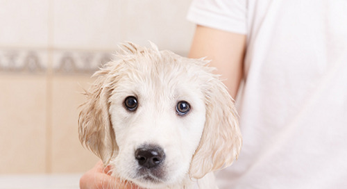 How to Make Bath Time Easier For Your Dog