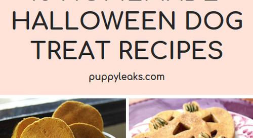15 Halloween Dog Treat Recipes