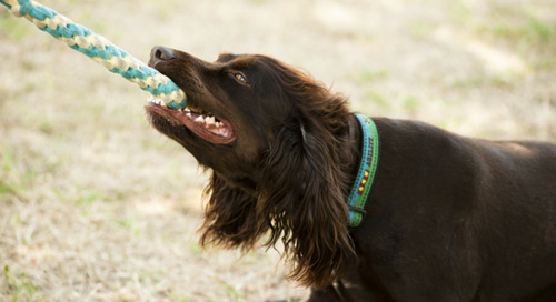 10 Easy Ways to Exercise Your Dog