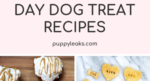 15 Valentine's Day Dog Treat Recipes
