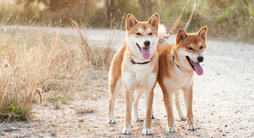 5 Reasons to Walk Your Dog Every Day