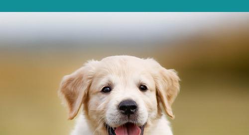 500 Japanese Dog Names