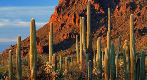 Sage Intacct Drives $7 Million in Business Value for the Hopi Tribe