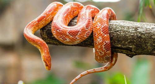 DeepArmor is Not Fooled by a Snake Shedding its Skin