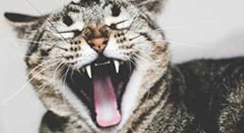 5 things your yawns are trying to tell you