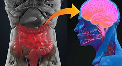 Are 'psychobiotics' the real deal?