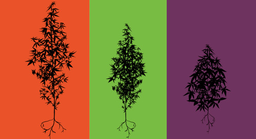 Leafly: Indica or Sativa? Cannabis Research is Changing Everything