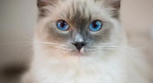 Top 10 Cat Breeds of 2019