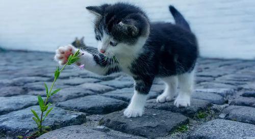 Celebrate Global Cat Day!