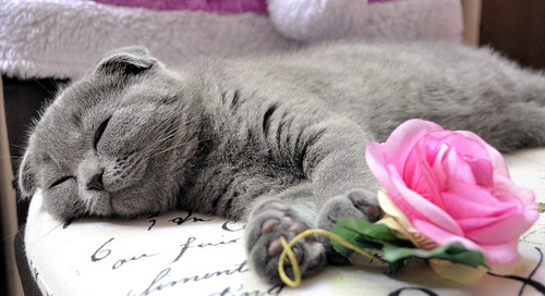 Valentine's Day Gift Guide for Cat Lovers