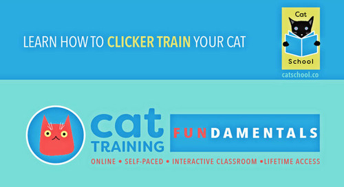 Cat School – Classes Now in Session