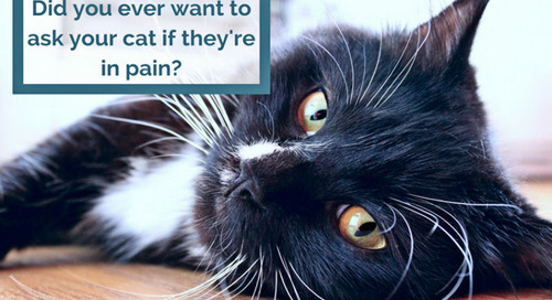 Introducing the Feline Musculoskeletal Pain Index