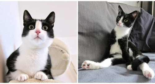A Heartwarming Tale of Two Rescue Cats