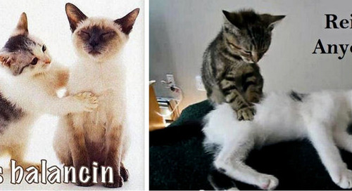 Reiki and Cats