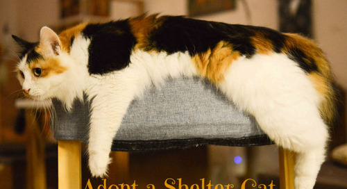 15 Clever Gift Ideas to Welcome Home a Newly Adopted Cat