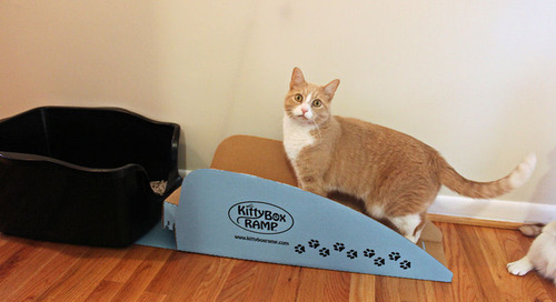 The Kitty Box Ramp