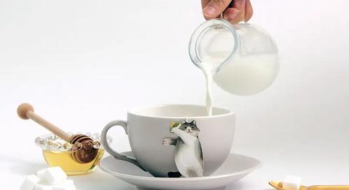 WIN a Cat Themed Tea Gift Set