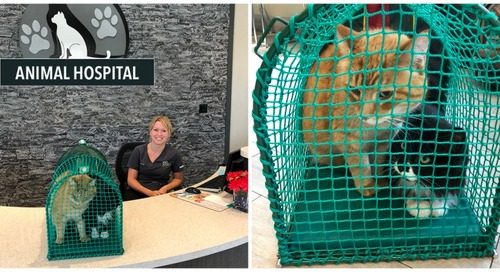Take Your Cat to the Vet Day